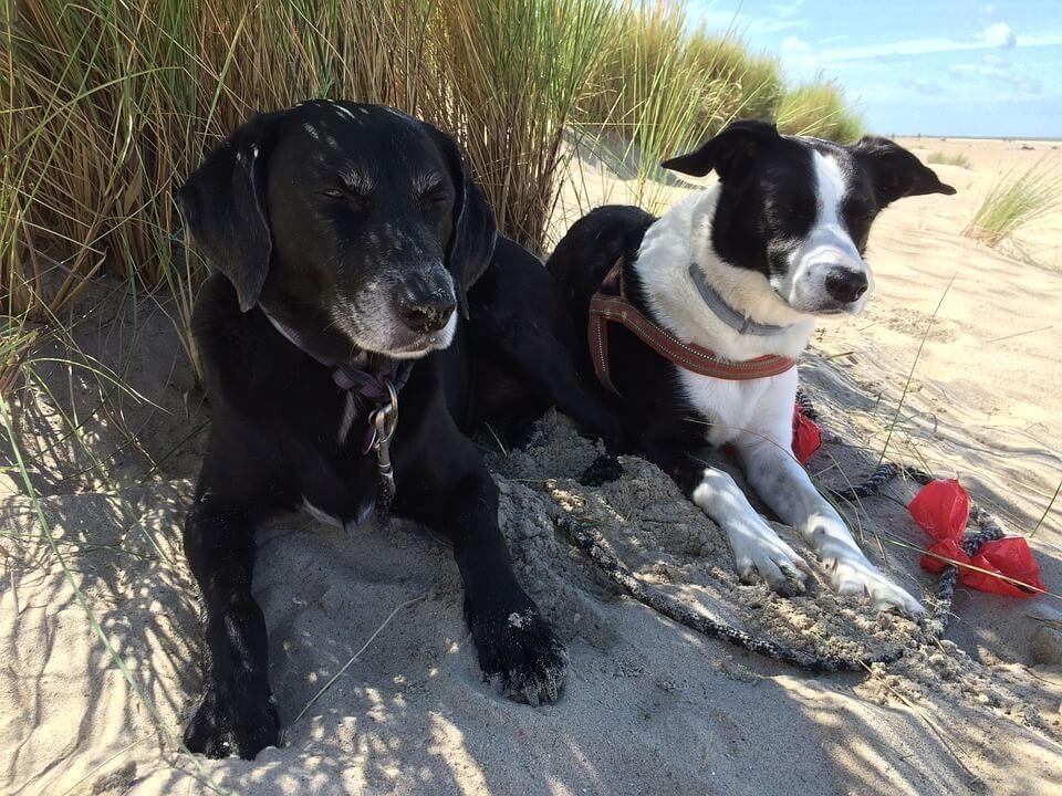 virginia beach dogs near boardwalk