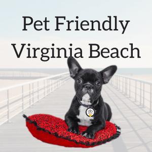 Pet Friendly Virginia Beach Guide courtesy of Dough Boy's Pizza Virginia Beach Oceanfront