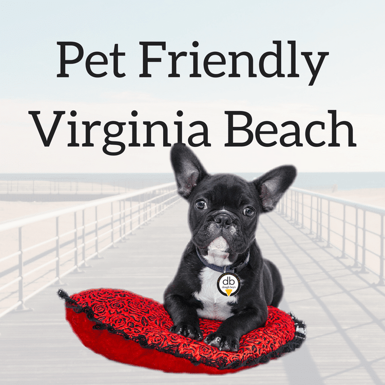 Blog Pet Friendly Virginia Beach
